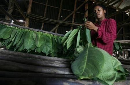 cuba-tobacco