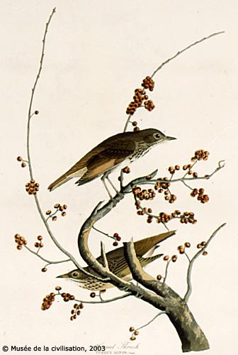 Birdsofamerica 58