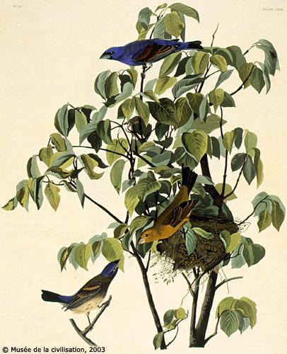 birdsofamerica 122