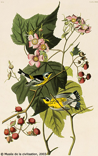 birdsofamerica 123
