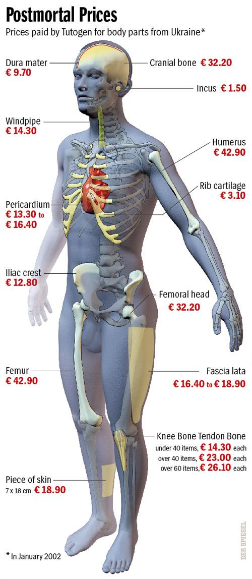 Inside A Creepy Global Body Parts Business Cervantes