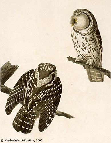 audubon_380