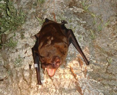 bat spain